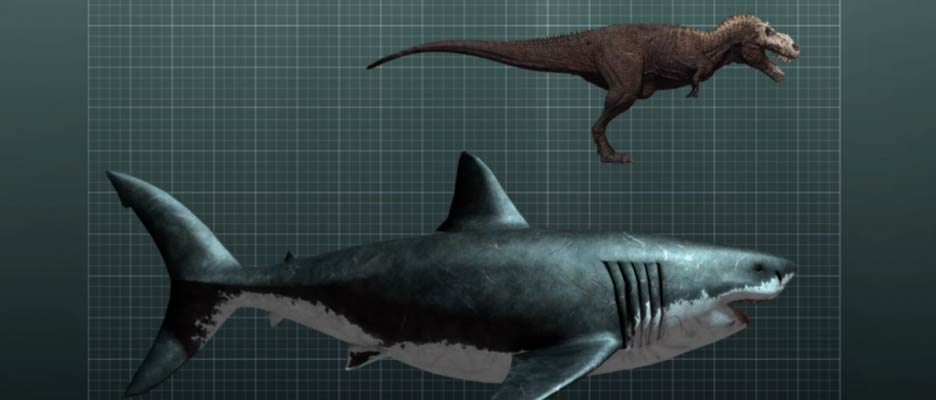 5 Things We Know About Megalodon (The Largest Shark In The World) – Top5s